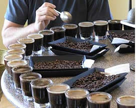 Tasting Specialty Coffee in Boquete