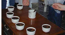 Take a coffee tour where the best coffee in the world is produced
